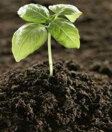 تهویه خاک